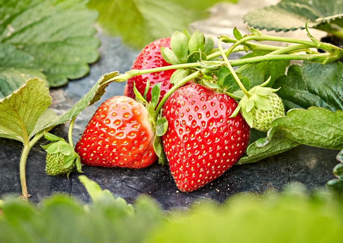 Strawberry Allergy Symptoms Treatment And What To Avoid