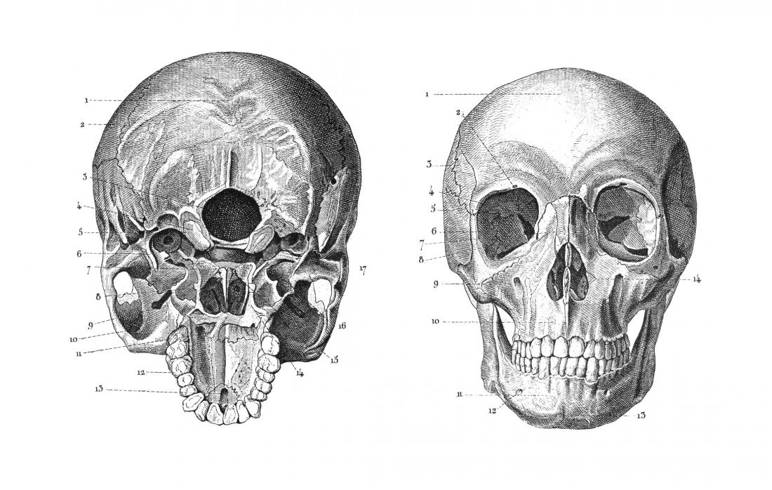 Skull drawings anatomy