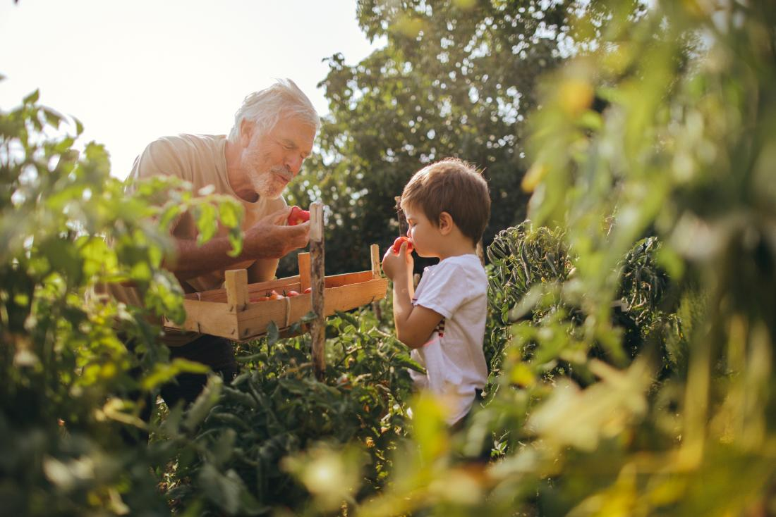 man and child tasting tomatoes in garden