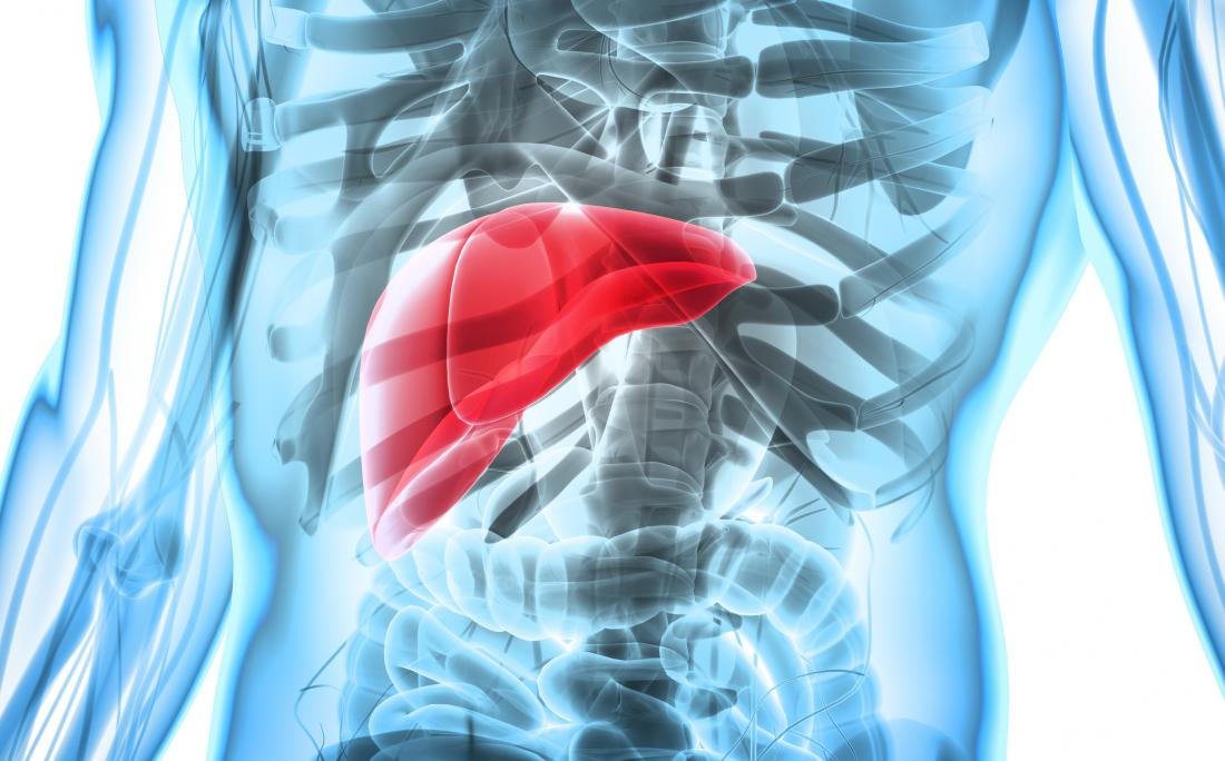 Liver in 3D render of human body