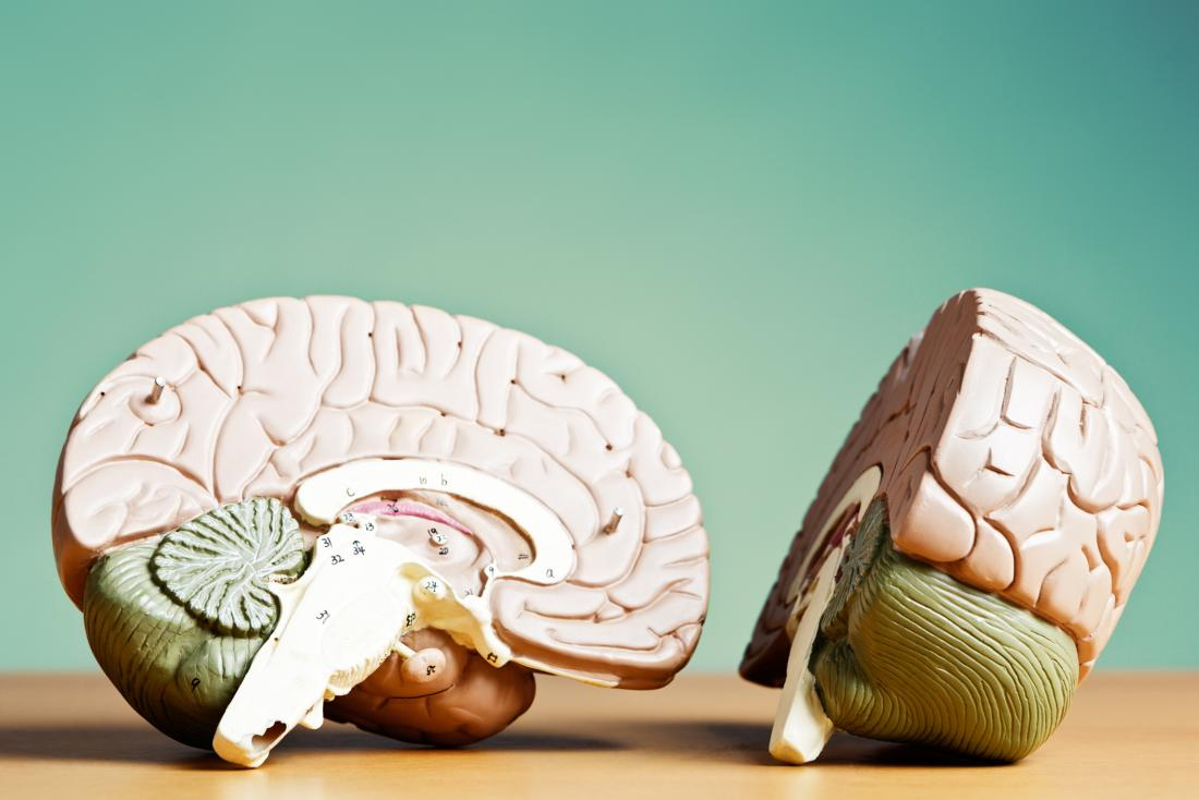left and right brain models