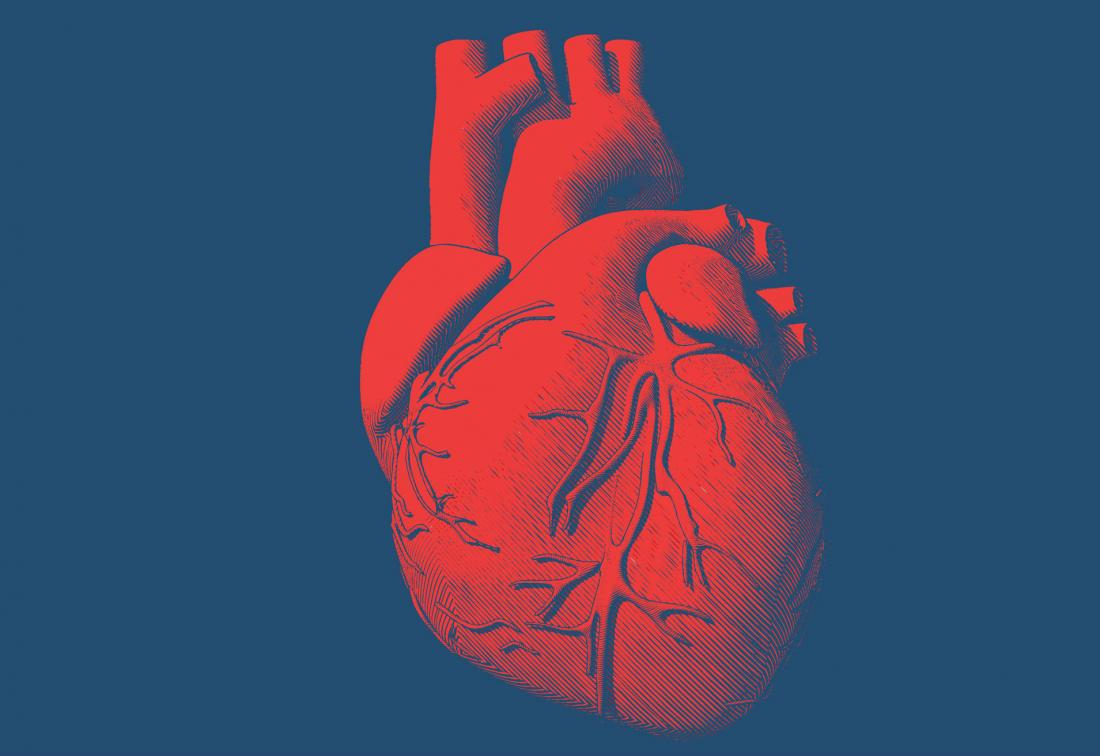 medical illustration of a heart