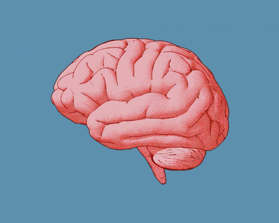 vintage illustration of a brain