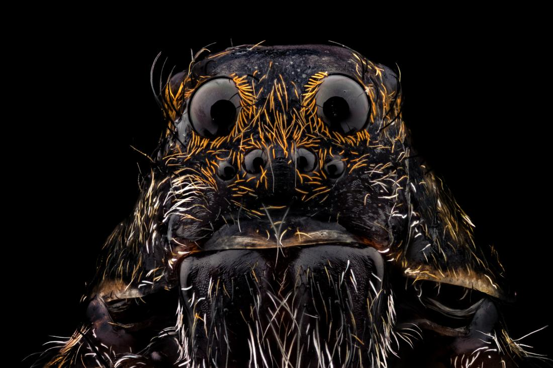 Spider close up