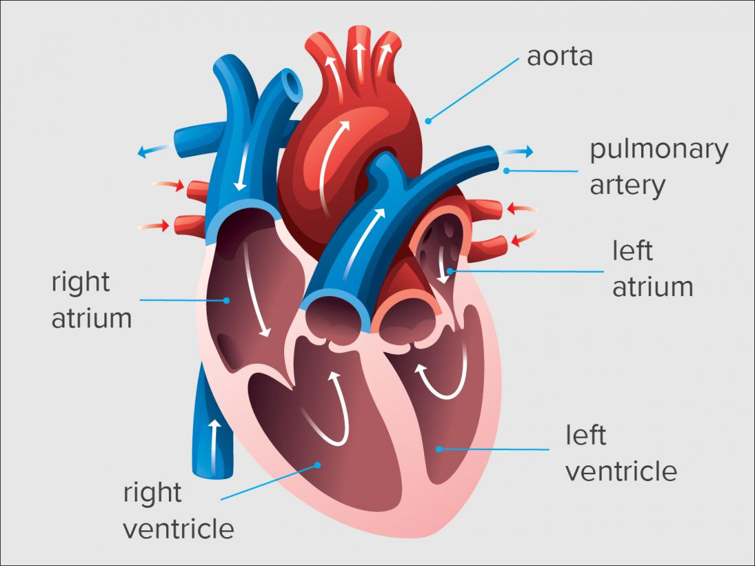 End diastolic volume is the measure of blood in the left or right ventricle before the heart contracts.