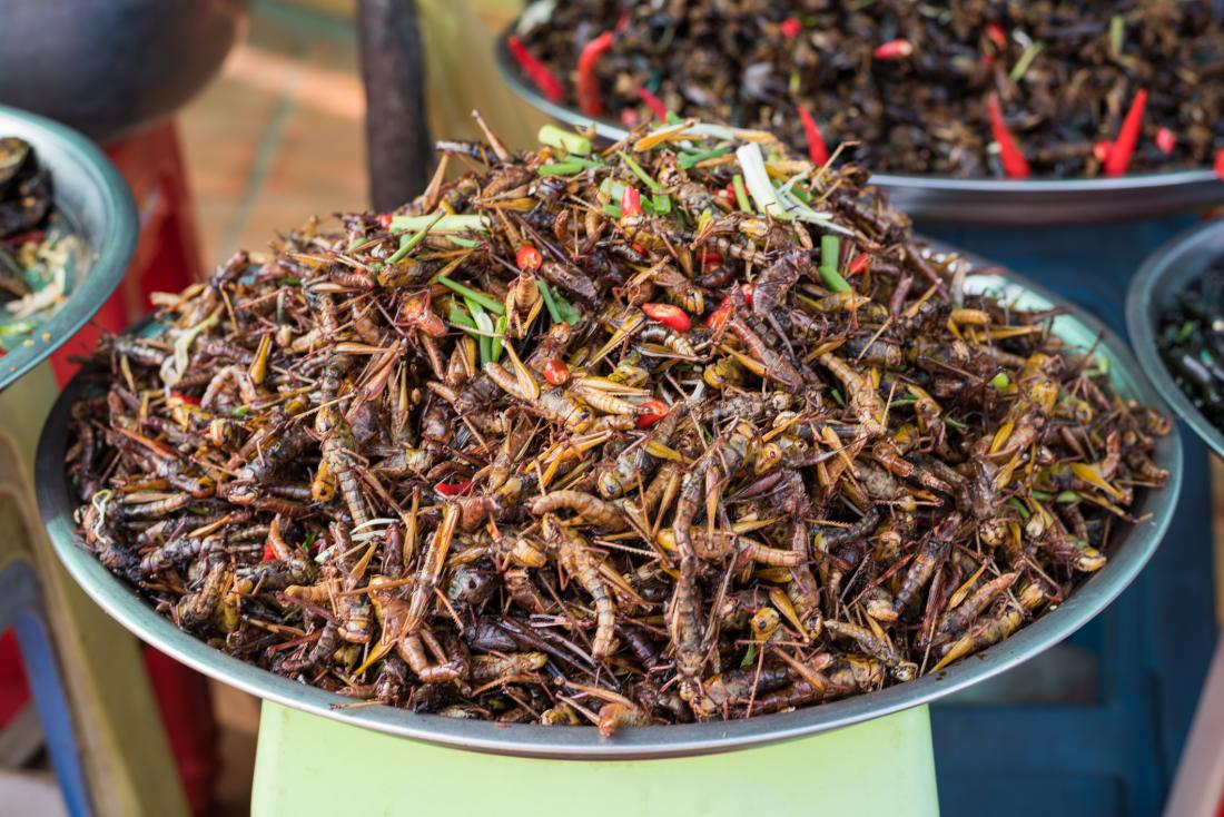 large bowl of fried edible insects
