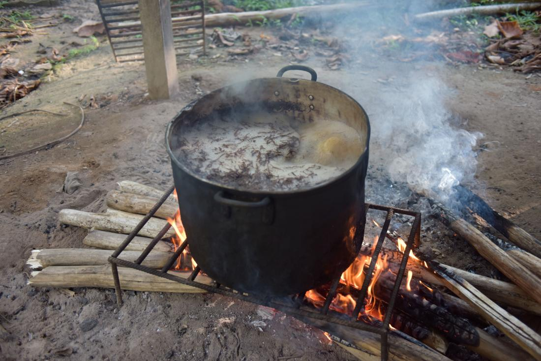 a pot of ayahuasca brew