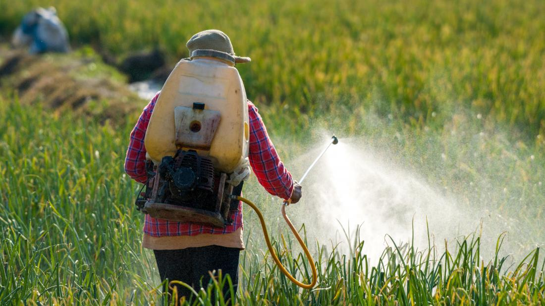 a man spraying Pesticides into a field of crops that will be used for food