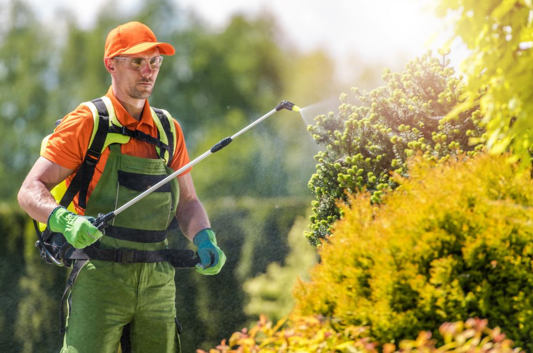 Man using pesticide spray