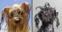 Here's The Science Behind Why Dogs Smell So Bad When Wet
