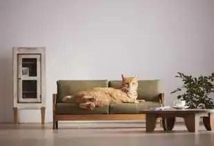 arredamento per gatti