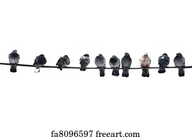 Free art print of Birds on a wire. Birds resting on a wire