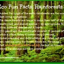 Rainforest Climate Facts For Kids Kids Matttroy