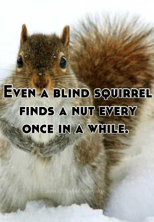 Blind Squirrel Finds A Nut Gif : blind, squirrel, finds, Blind, Squirrel, Finds, BLINDS