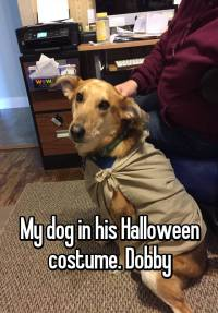 My dog in his Halloween costume. Dobby