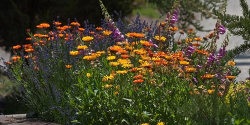 Easy Flower Garden Care Ideas Garden Guides