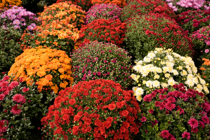Ideas For Fall Container Gardens Garden Guides