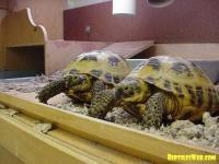 Do Tortoises Need A Heat Lamp. Indoor Heating For ...