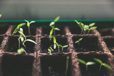 nurture_grow