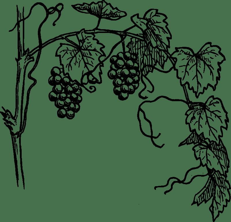Free Grapevine 1