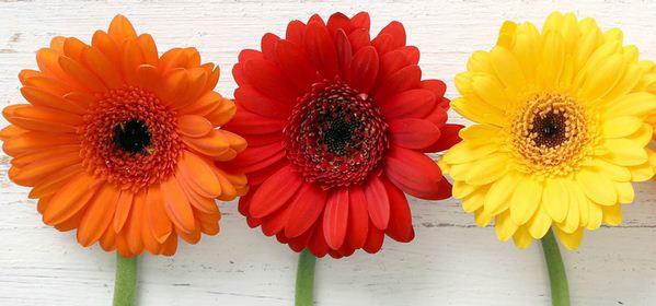 Blumenladen Detmold