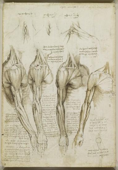 Resultado de imagen de Los ESTUDIOS ANATÓMICOS de Leonardo: Tan e incluso MÁS EXACTOS que la tecnología del S. XXI