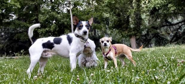 Tres perros en un parque