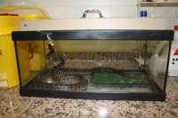Una serpiente de 1,20 metros muerde en el antebrazo a un policía local de Málaga tras capturarla