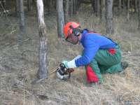 El IFA de Jaca trabajará en la ordenación forestal del Monte 'El Boalar'