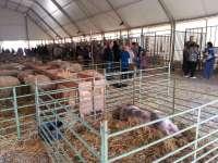 La Feria de Ganado de Valderrobres tendrá recinto empresarial y mercadillo