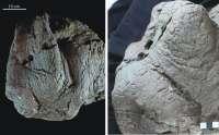 Dinópolis exhibe una huella de dinosaurio 4D con motivo del Día de los Museos