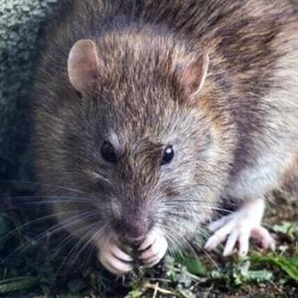A man in China died from hantavirus and the news has caused some ...