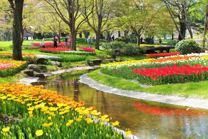 「昭和記念公園 tulip」の画像検索結果