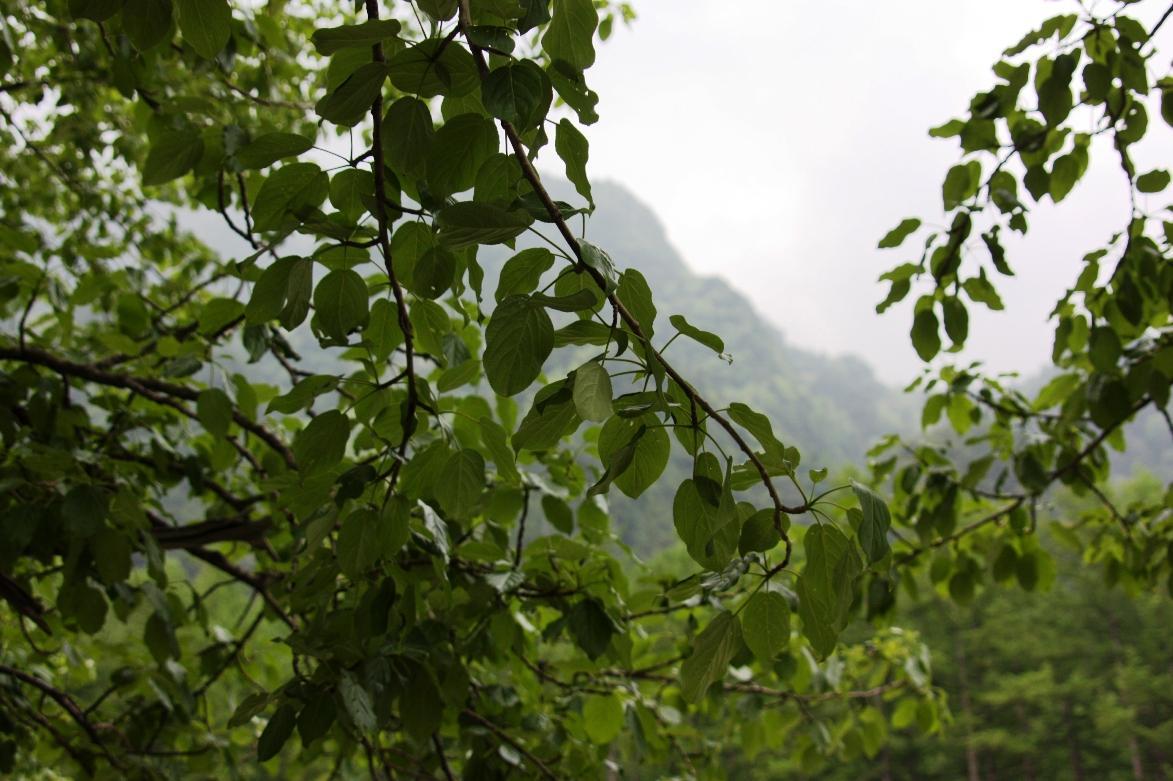 『梅雨入りの信州(9) 上高地の木々 ~2009年6月~』上高地(長野県 ...