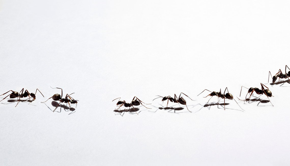 Tactics to Get Rid of Bugs, House Spring Cleaning