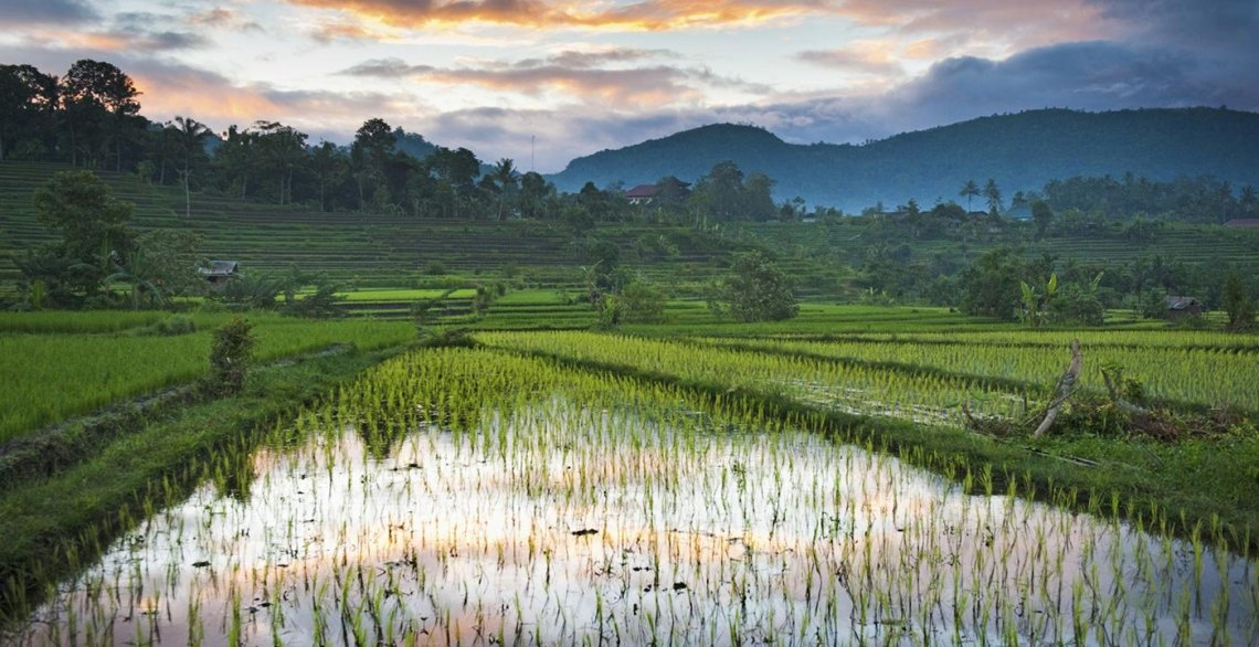Image Result For Bali Vacation Tips