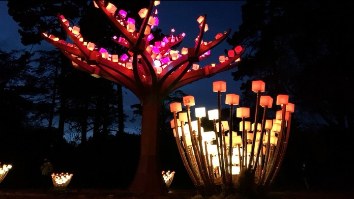 "The artist behind ""Entwined"" art installation in Golden Gate Park"