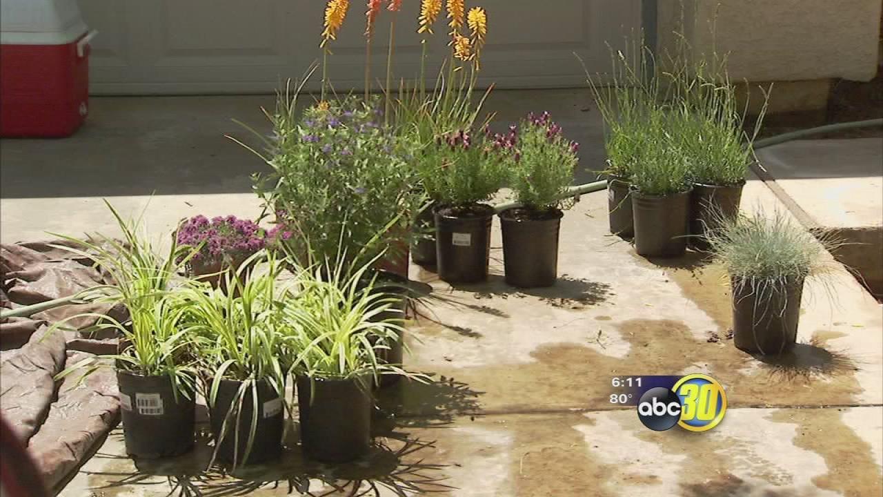 drought-resistant garden showcased
