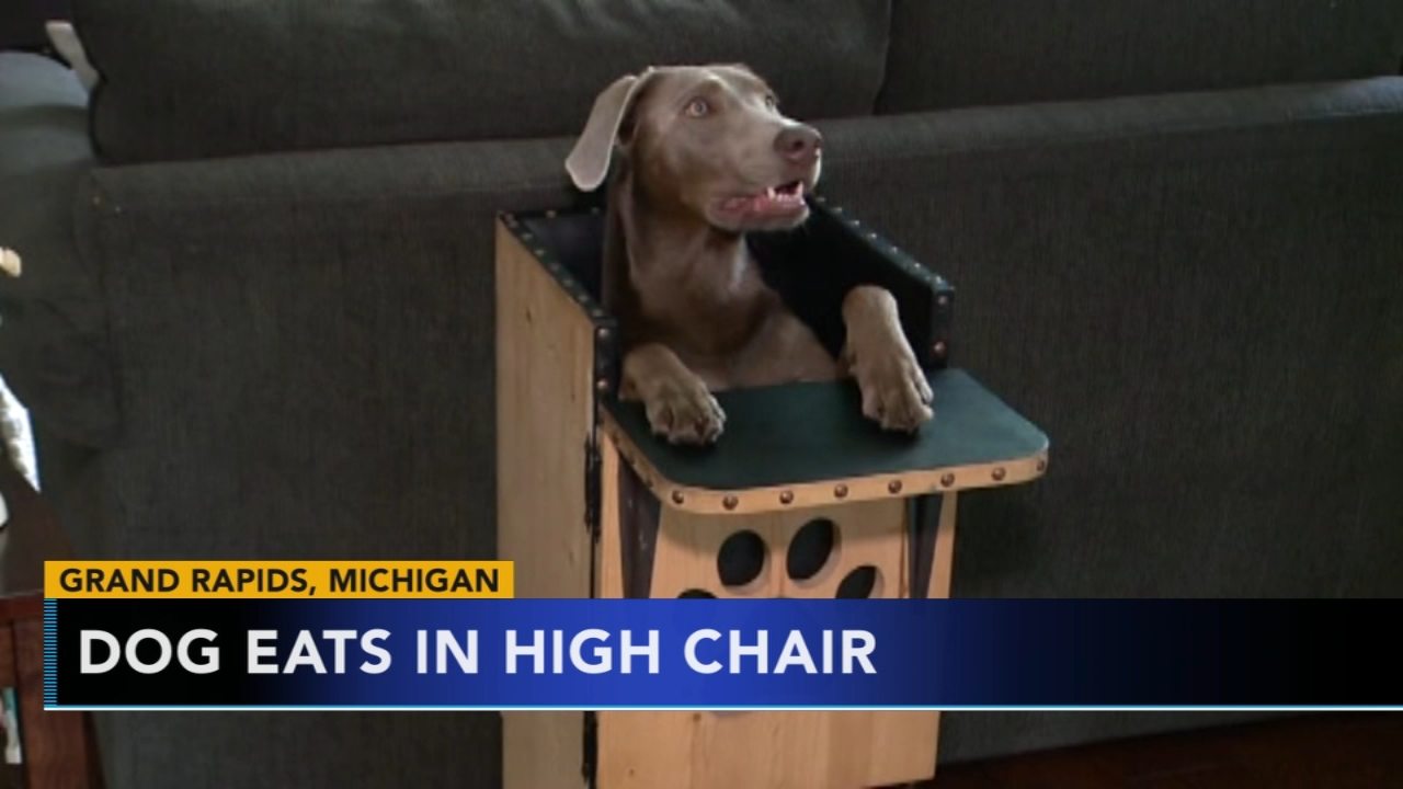 dog high chair for stairs elderly with special condition sits in at table 6abc com