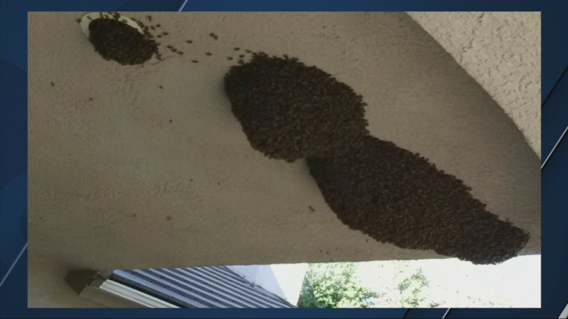 thousands of bees removed
