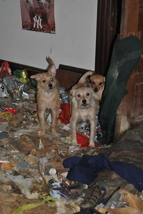 18 Dogs Rescued From Hoarder S Home In Pacific Grove