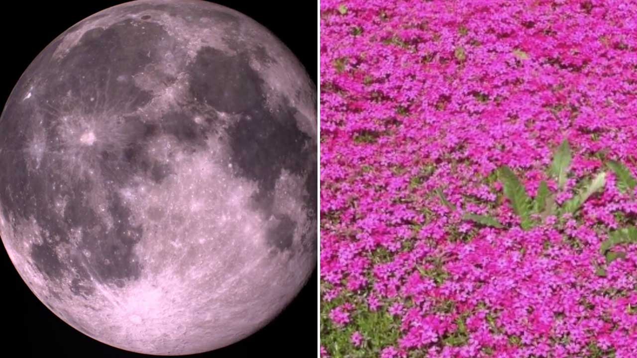 Pink Full Moon 2019 Meaning Behind Nickname For April S