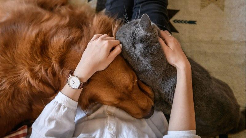 Coronavirus: Can the outbreak affect pets? Expert explains ...