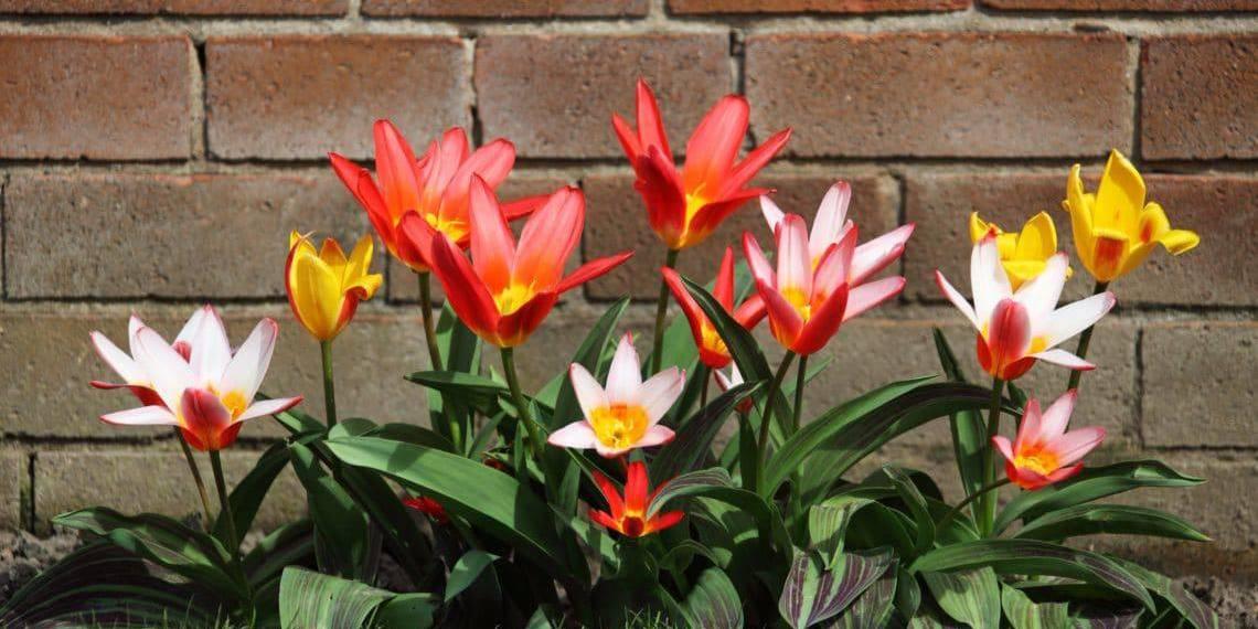 The Many Benefits Of Gardening