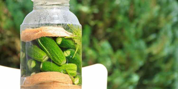 The 10 Reasons Why You Should Be Drinking Pickle Juice