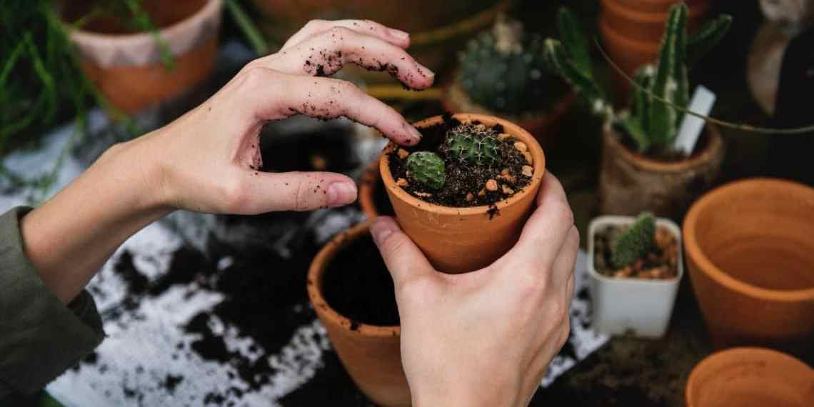 The Top Tools to a DIY Personal Garden