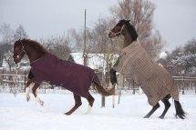 Picks 4 Winter Horse Blankets Heavy Duty