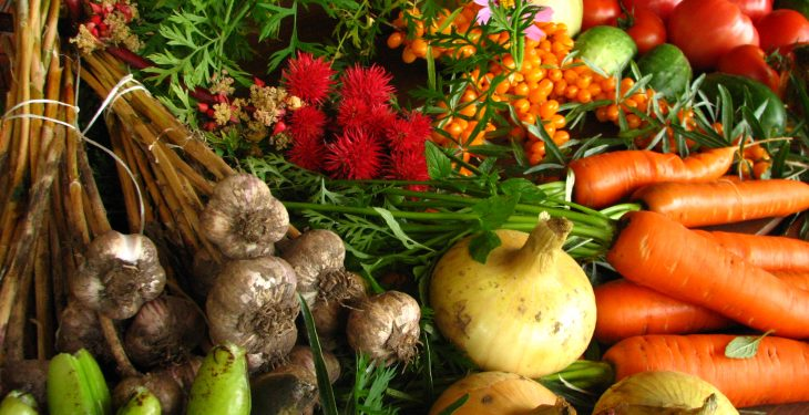 Re-opening of Organic Farming Scheme must not be 'flawed' – IFA