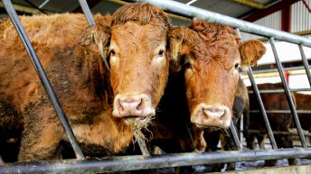 Beef payment closes for applications today