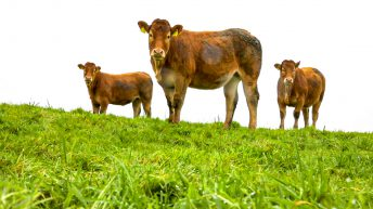 Irish Beef Producers' submission for PGI 'would offer major boost for sector'